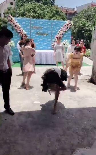 Nóng lòng thoát ế, cô gái lao lên bắt hoa cưới ngã sấp mặt, cả người lẫn hoa đều tan nát-2