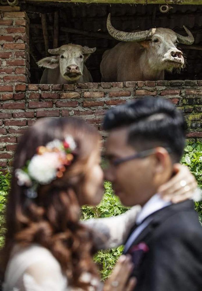 Thuê nhầm tình cũ chụp ảnh cưới, cặp dâu rể hết hồn xem lại dung nhan-6