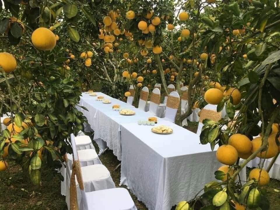 Làm đám cưới trong vườn bưởi trĩu quả, khách muốn ăn cỗ trong bình yên chắc phải đội mũ bảo hiểm-1