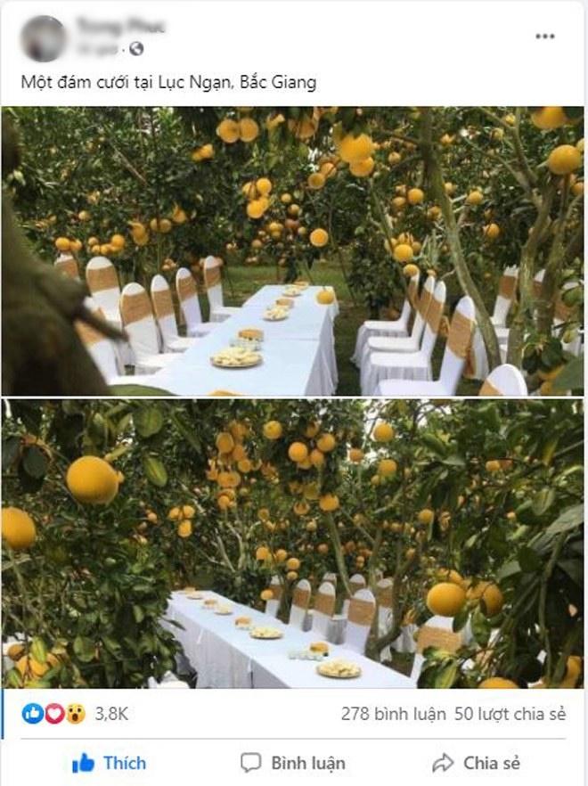 Sự thật đằng sau đám cưới trong vườn bưởi sai trĩu quả gây sốt trong những ngày qua-1