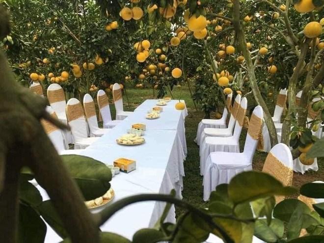 Sự thật đằng sau đám cưới trong vườn bưởi sai trĩu quả gây sốt trong những ngày qua-3